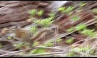 bayburt-belgeseli-tanitim-filmi