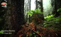 foto-cografya-ayder-yaylasi-rize-izle-video