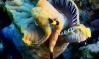 anadolu-mavisi-6-bolum-trt-belgesel-izle-video