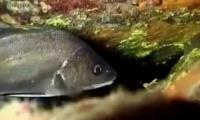 anadolu-mavisi-3-bolum-trt-belgesel-izle-video
