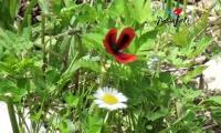 artvin-yusufeli-tanitim-filmi